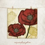 Poppies_001_A