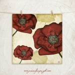 Poppies_002_A
